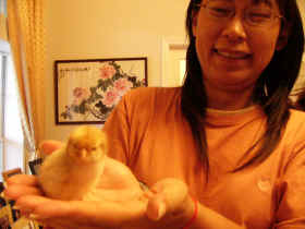 Shannon with new chick, Peach